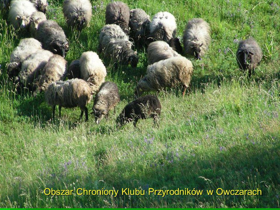 Obszar Chroniony Klubu Przyrodników w Owczarach
