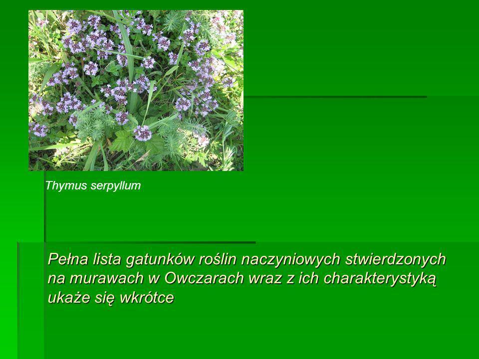 Pełna lista gatunków roślin naczyniowych stwierdzonych na murawach w Owczarach wraz z ich charakterystyką ukaże się wkrótce