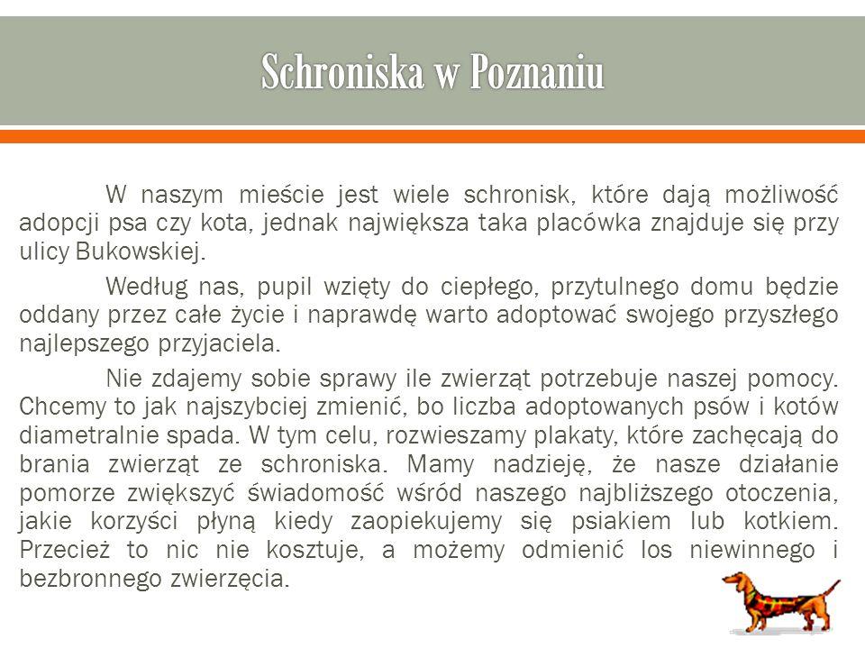 Schroniska w Poznaniu