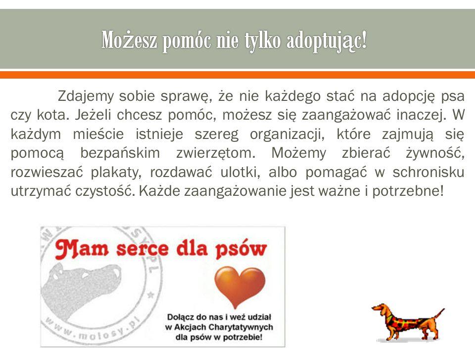 Możesz pomóc nie tylko adoptując!