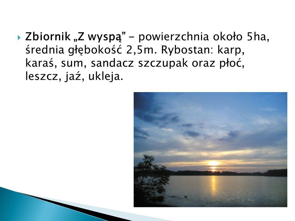 """Zbiornik """"Z wyspą - powierzchnia około 5ha, średnia głębokość 2,5m"""