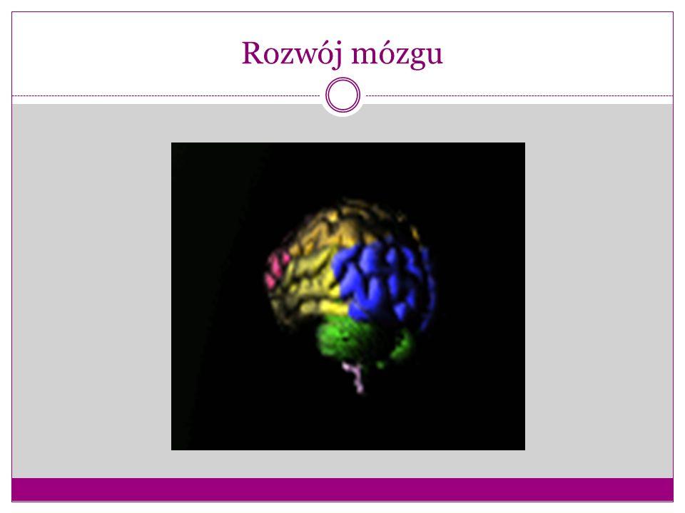 Rozwój mózgu