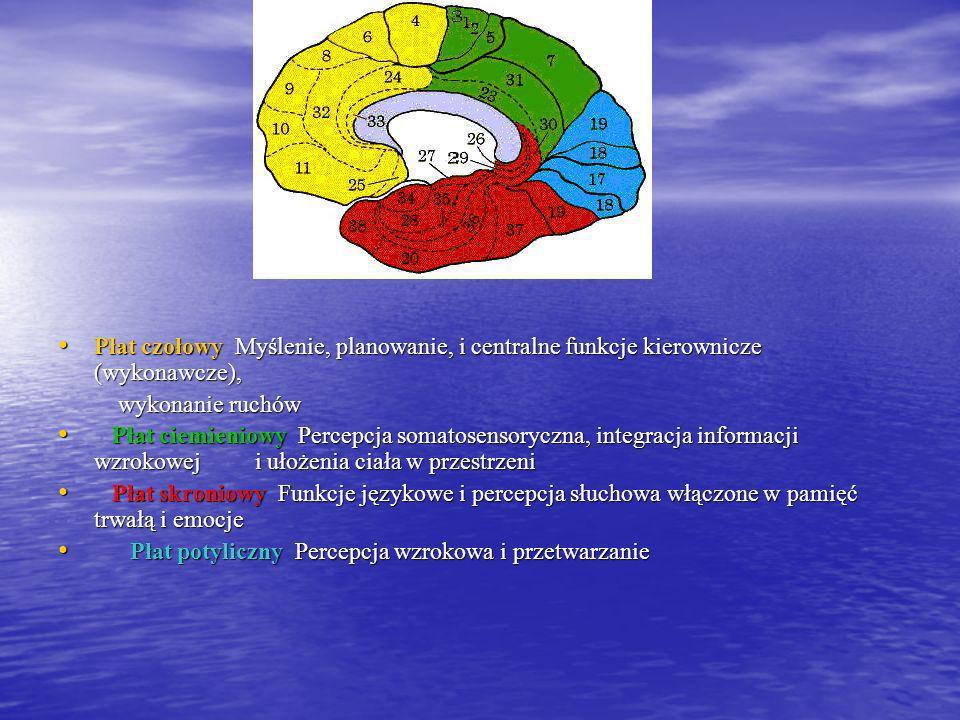 Płat czołowy Myślenie, planowanie, i centralne funkcje kierownicze (wykonawcze),