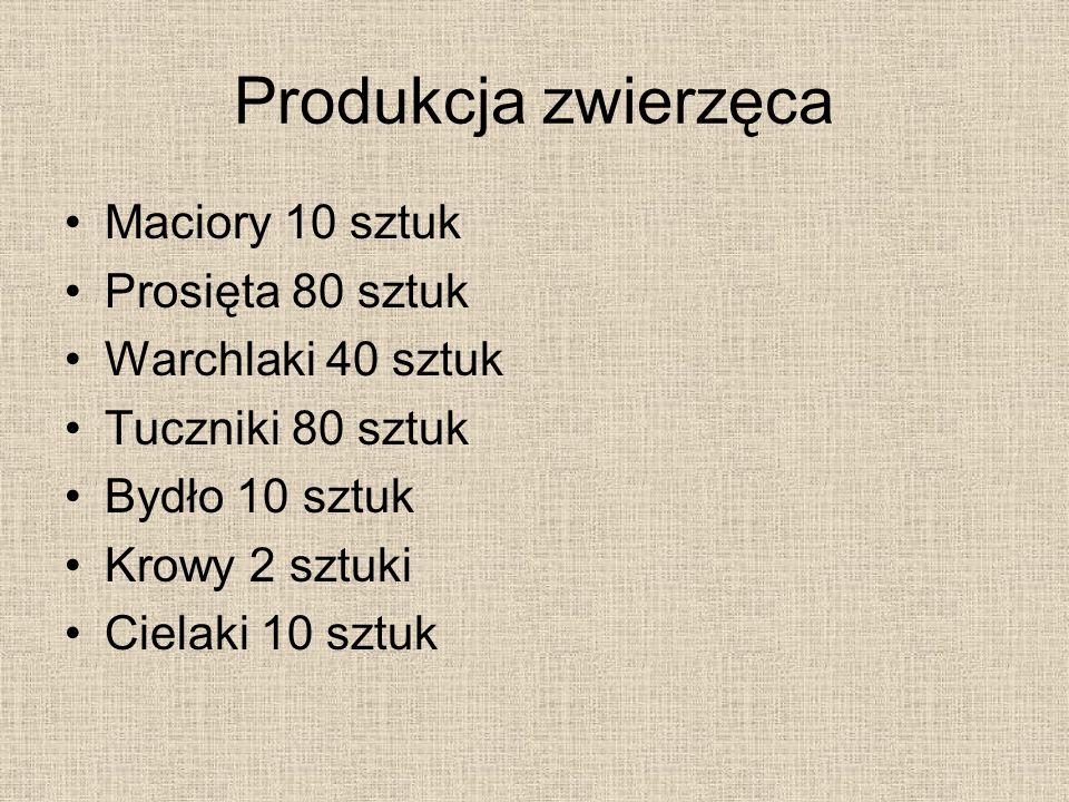 Produkcja zwierzęca Maciory 10 sztuk Prosięta 80 sztuk