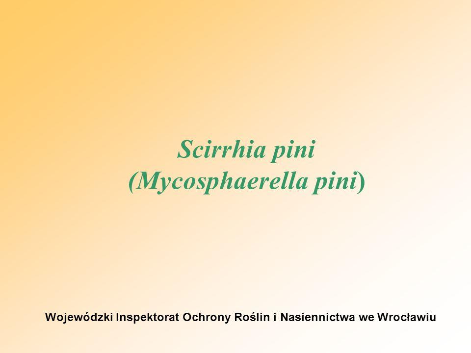 Scirrhia pini (Mycosphaerella pini)