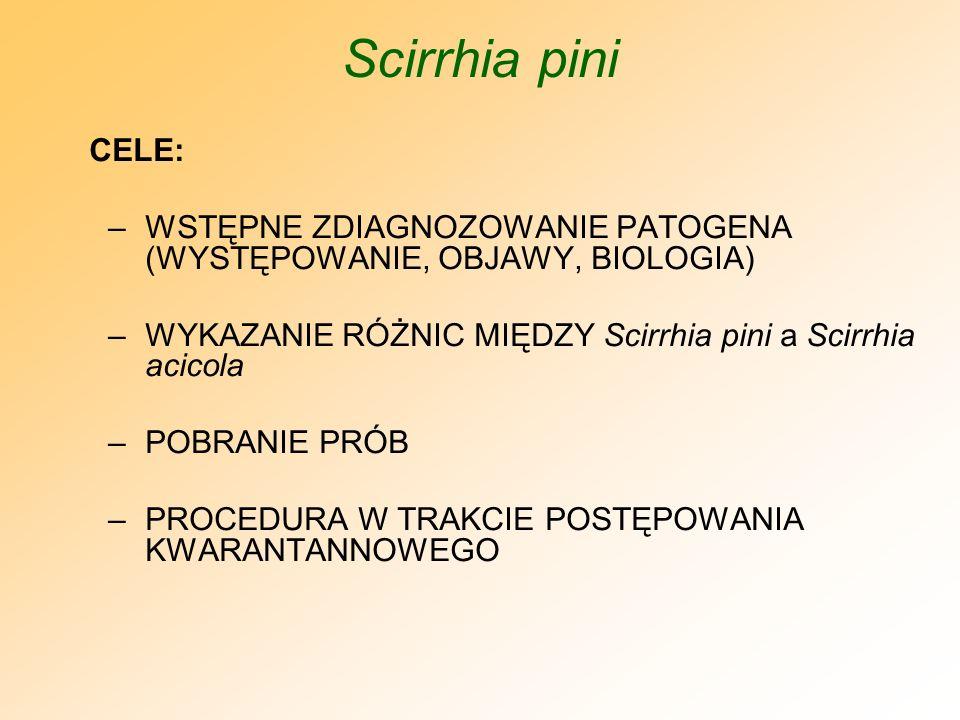Scirrhia pini CELE: WSTĘPNE ZDIAGNOZOWANIE PATOGENA (WYSTĘPOWANIE, OBJAWY, BIOLOGIA) WYKAZANIE RÓŻNIC MIĘDZY Scirrhia pini a Scirrhia acicola.