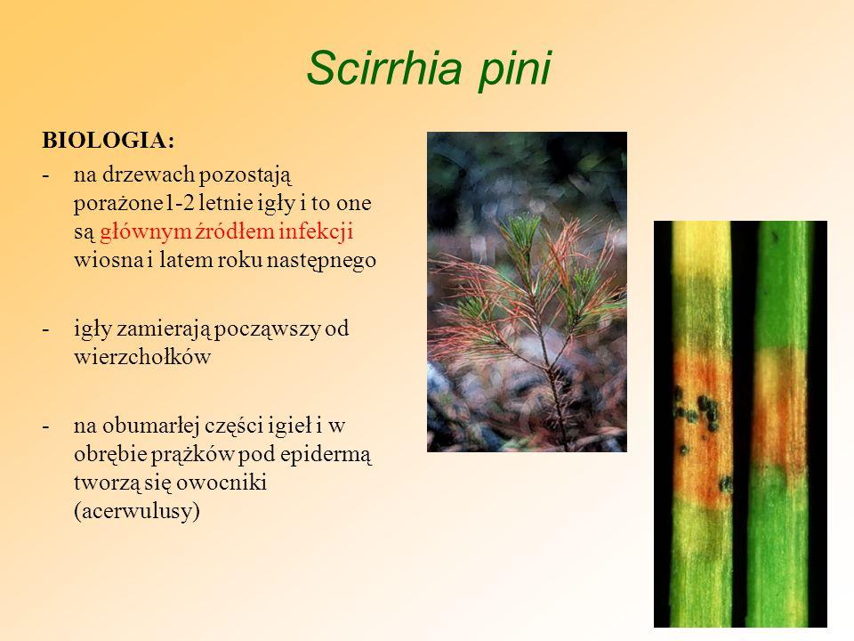 Scirrhia pini BIOLOGIA: