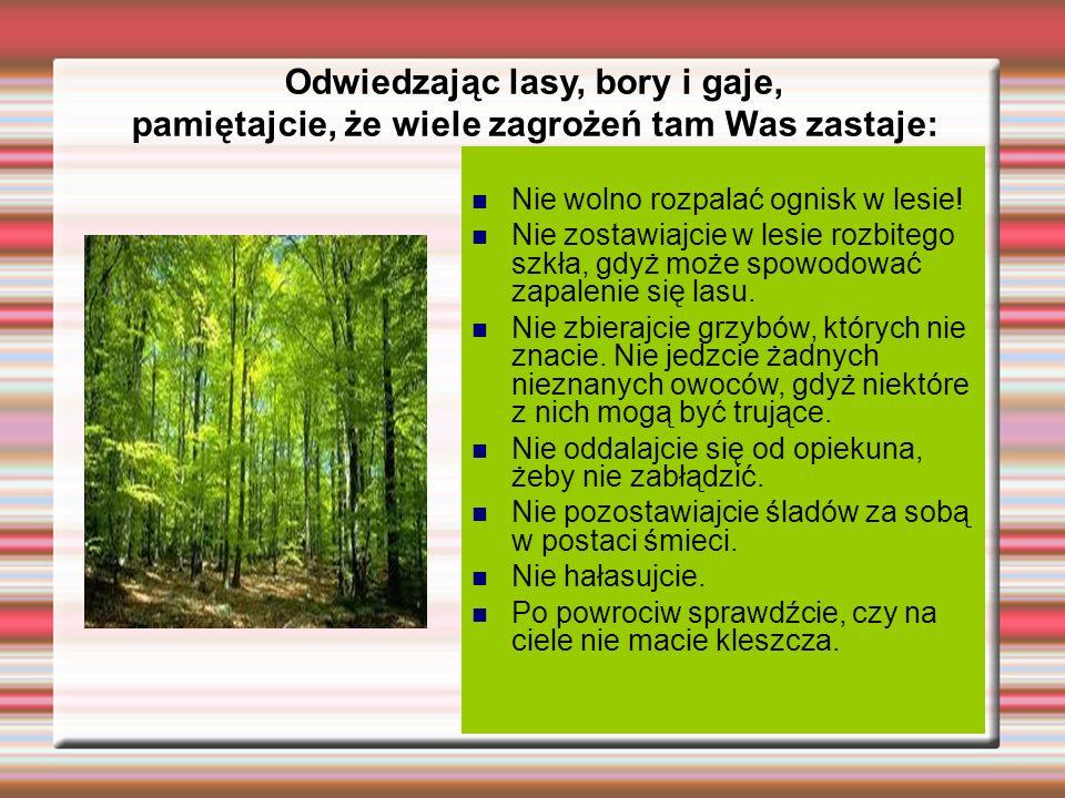 Odwiedzając lasy, bory i gaje,