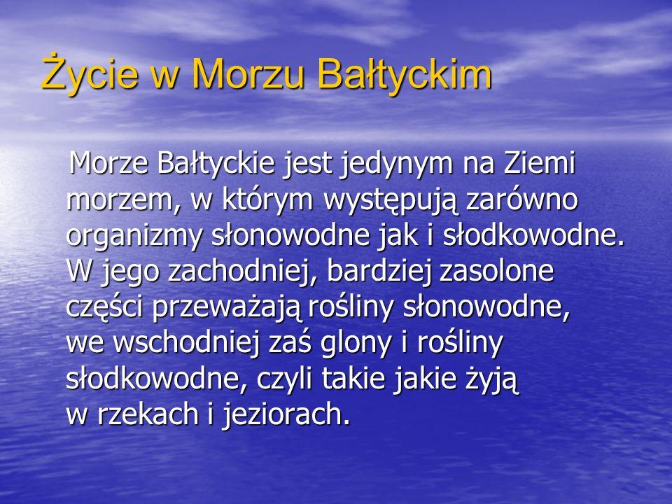 Życie w Morzu Bałtyckim