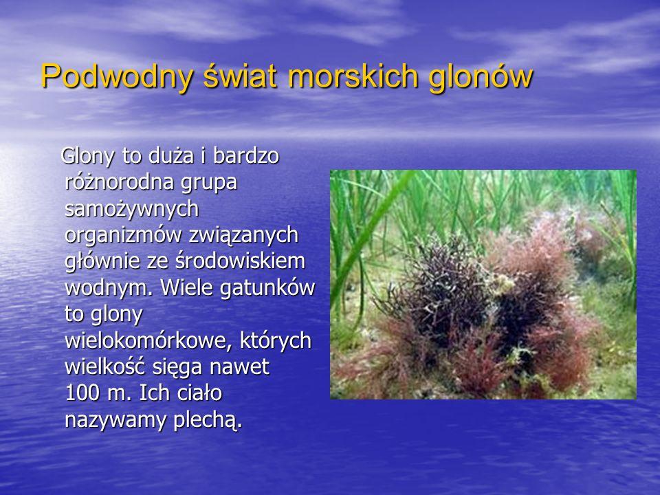 Podwodny świat morskich glonów