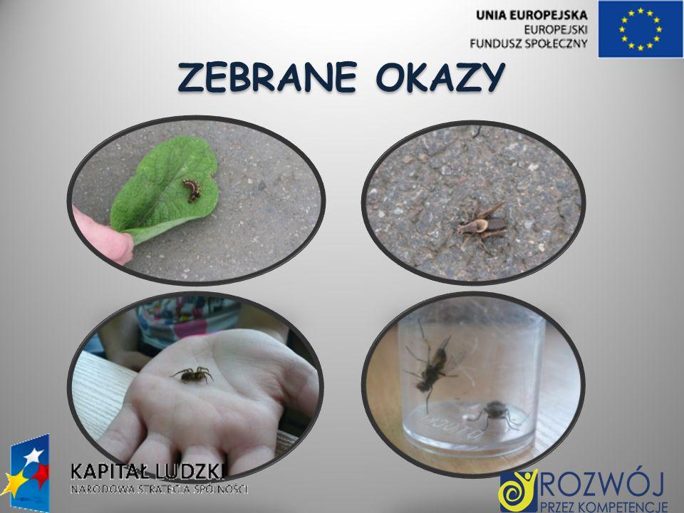 ZEBRANE OKAZY