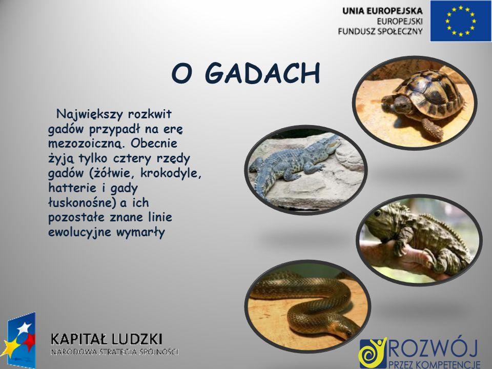 O GADACH