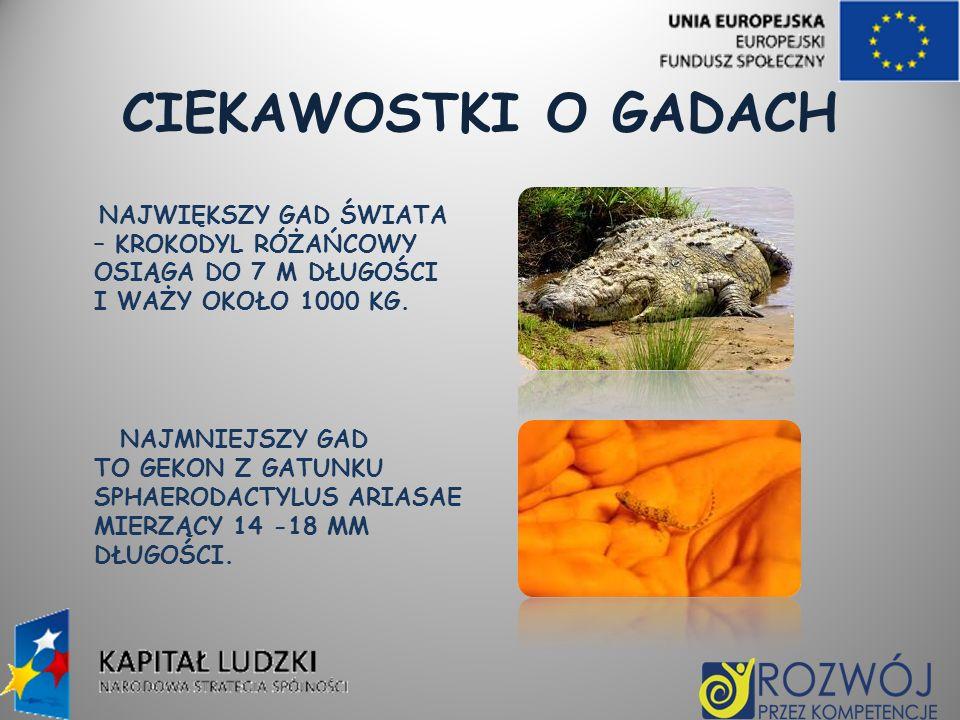 CIEKAWOSTKI O GADACH NAJWIĘKSZY GAD ŚWIATA – KROKODYL RÓŻAŃCOWY OSIĄGA DO 7 M DŁUGOŚCI I WAŻY OKOŁO 1000 KG.