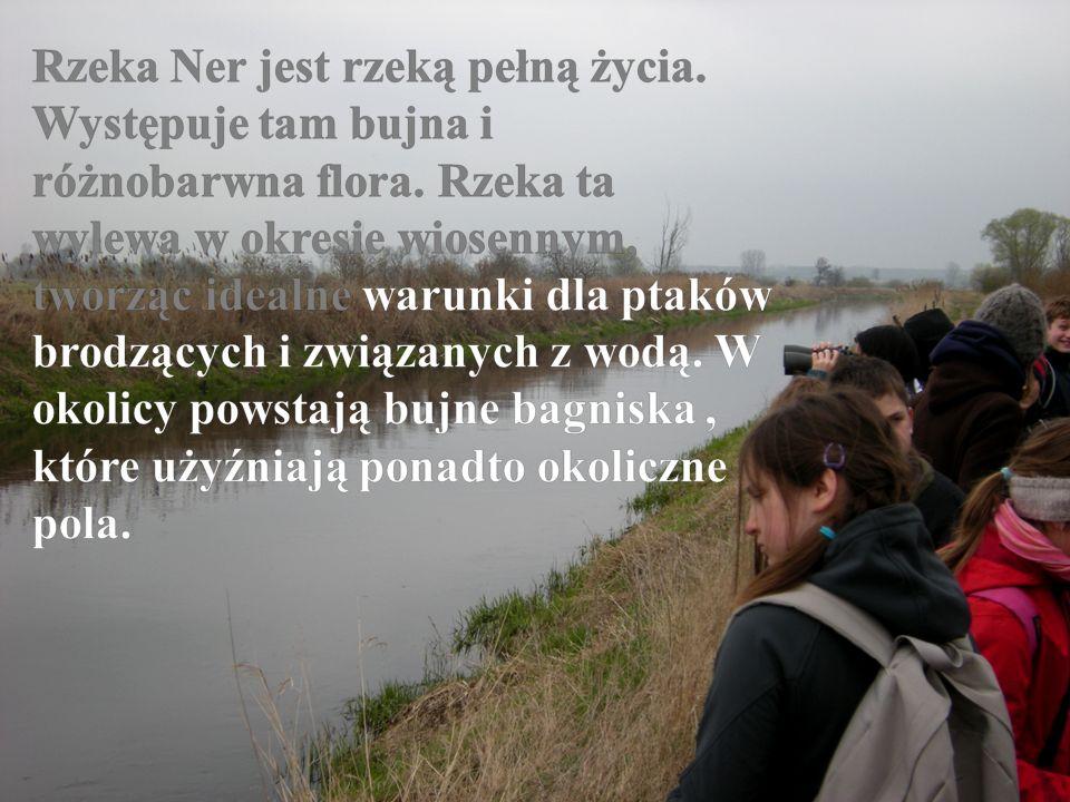 Rzeka Ner jest rzeką pełną życia