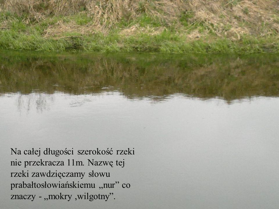 Na całej długości szerokość rzeki nie przekracza 11m