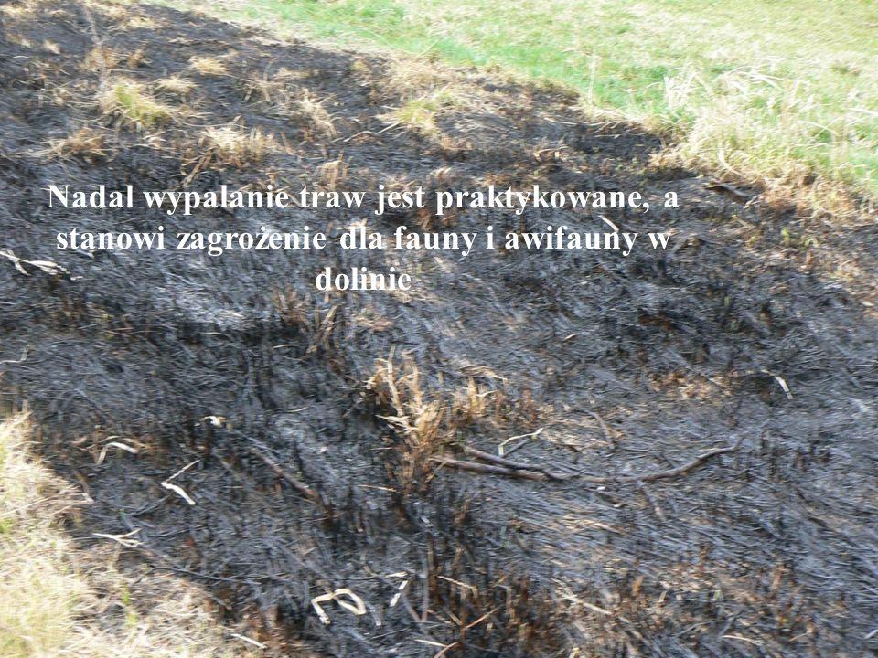 Nadal wypalanie traw jest praktykowane, a stanowi zagrożenie dla fauny i awifauny w dolinie