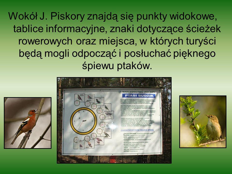 Wokół J.
