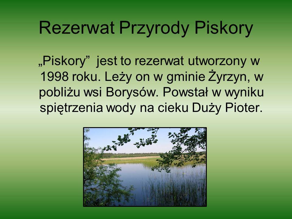 Rezerwat Przyrody Piskory