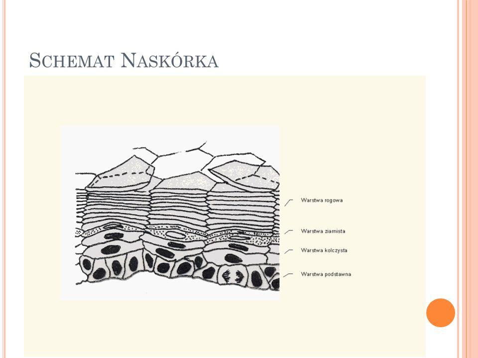 Schemat Naskórka