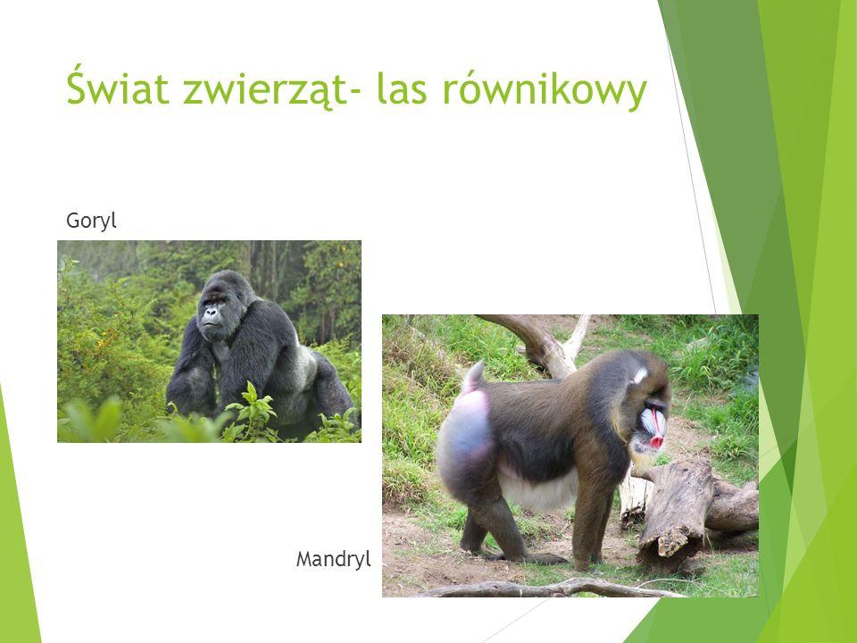 Świat zwierząt- las równikowy