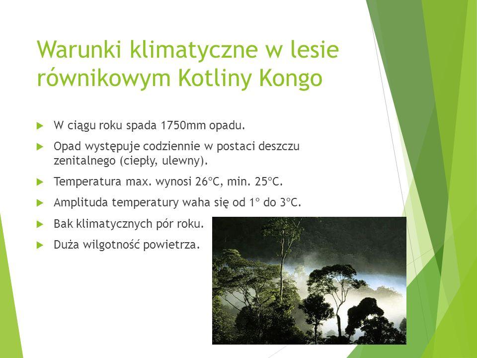 Warunki klimatyczne w lesie równikowym Kotliny Kongo