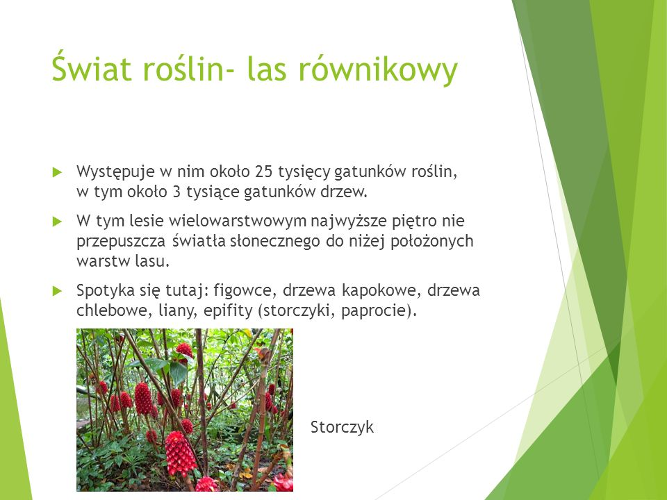 Świat roślin- las równikowy