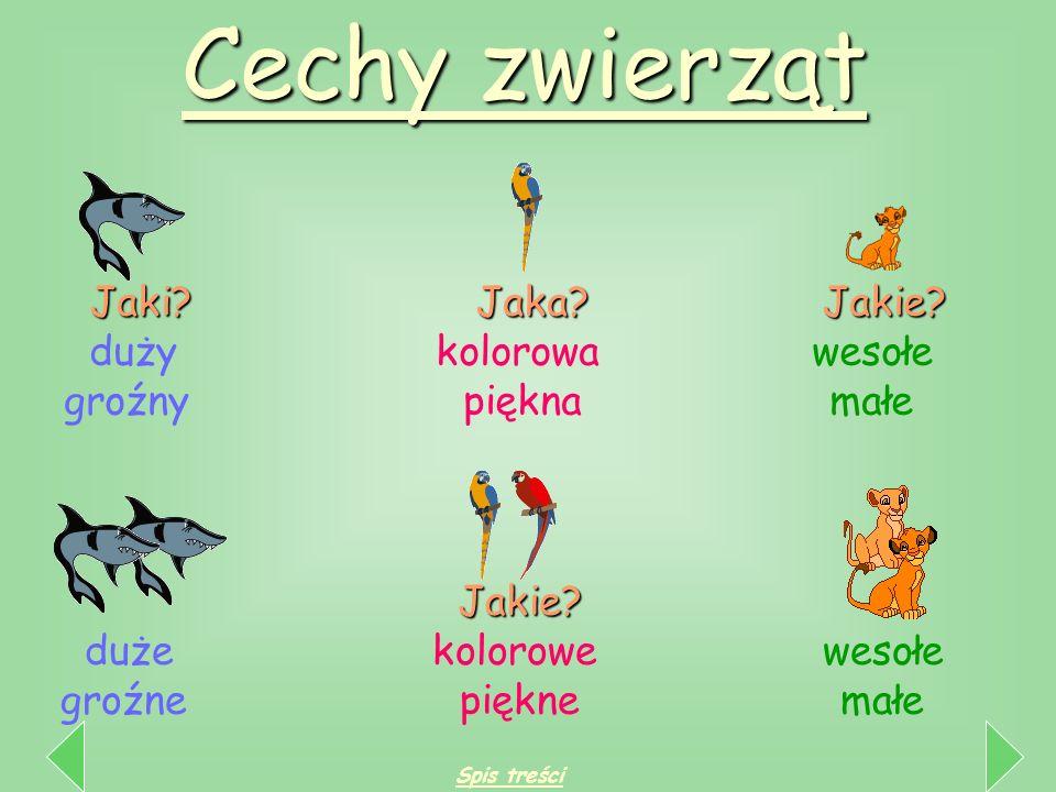 Cechy zwierząt Jaki Jaka Jakie duży kolorowa wesołe