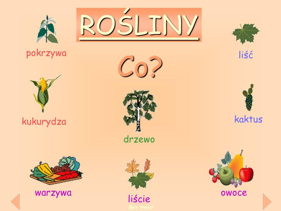 Co ROŚLINY pokrzywa liść kaktus kukurydza drzewo warzywa owoce liście