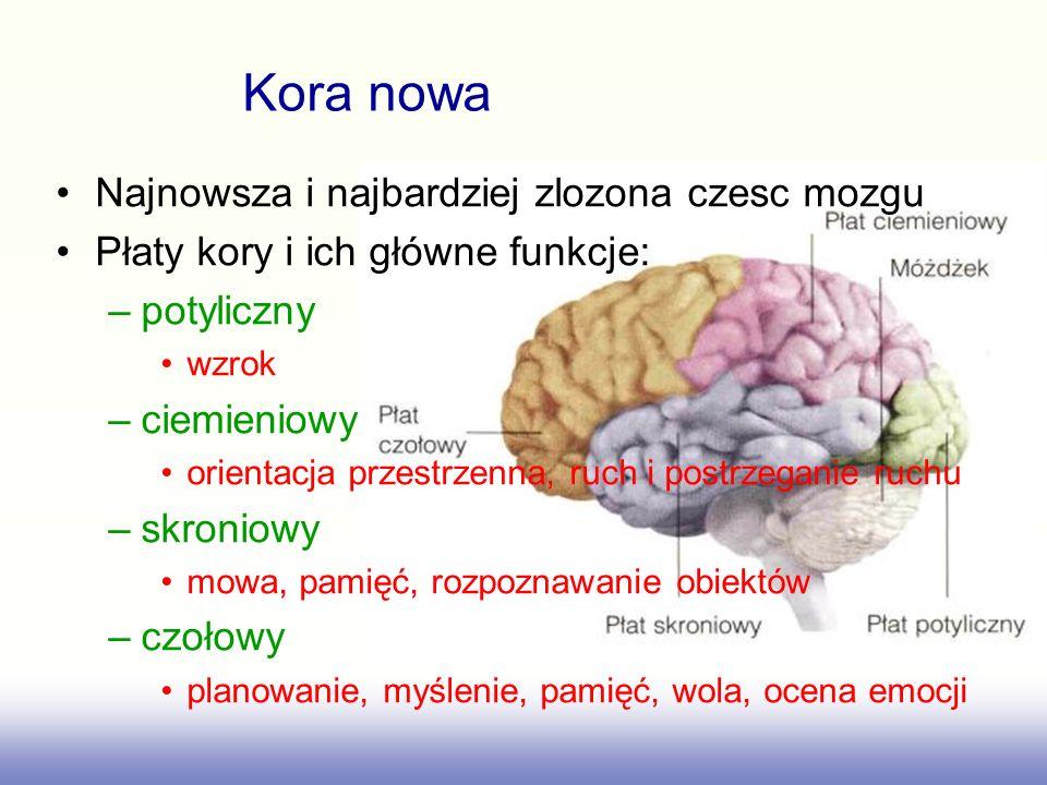 Kora nowa Najnowsza i najbardziej zlozona czesc mozgu