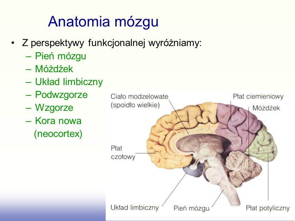 Anatomia mózgu Z perspektywy funkcjonalnej wyróżniamy: Pień mózgu
