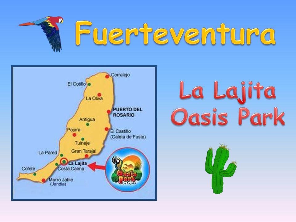 Fuerteventura La Lajita Oasis Park