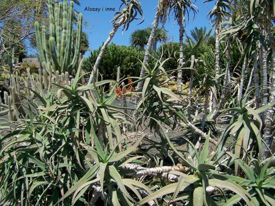 Aloesy i inne