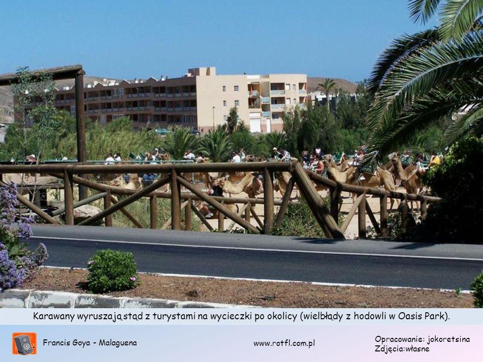 Karawany wyruszają stąd z turystami na wycieczki po okolicy (wielbłądy z hodowli w Oasis Park).