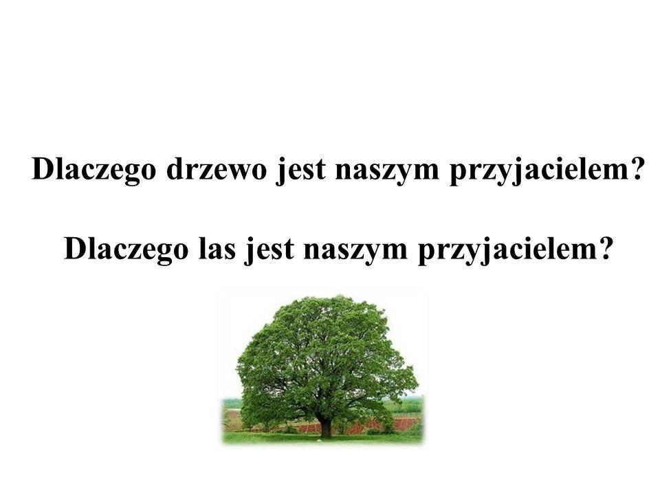Dlaczego drzewo jest naszym przyjacielem