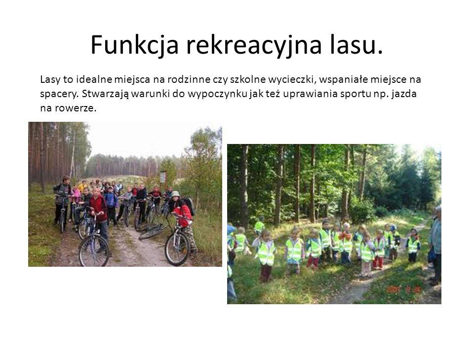 Funkcja rekreacyjna lasu.