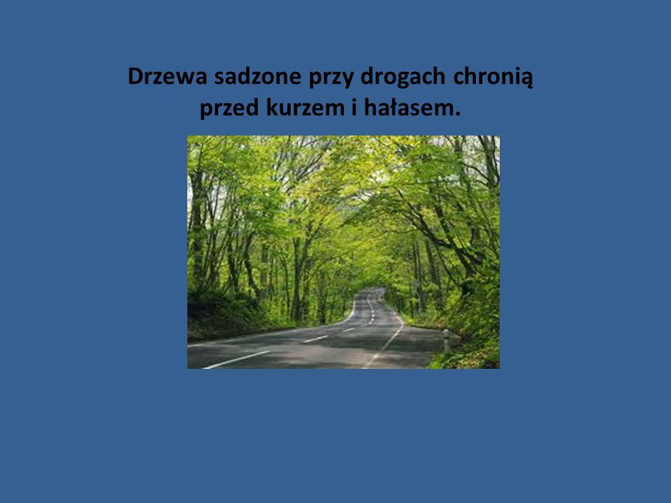 Drzewa sadzone przy drogach chronią