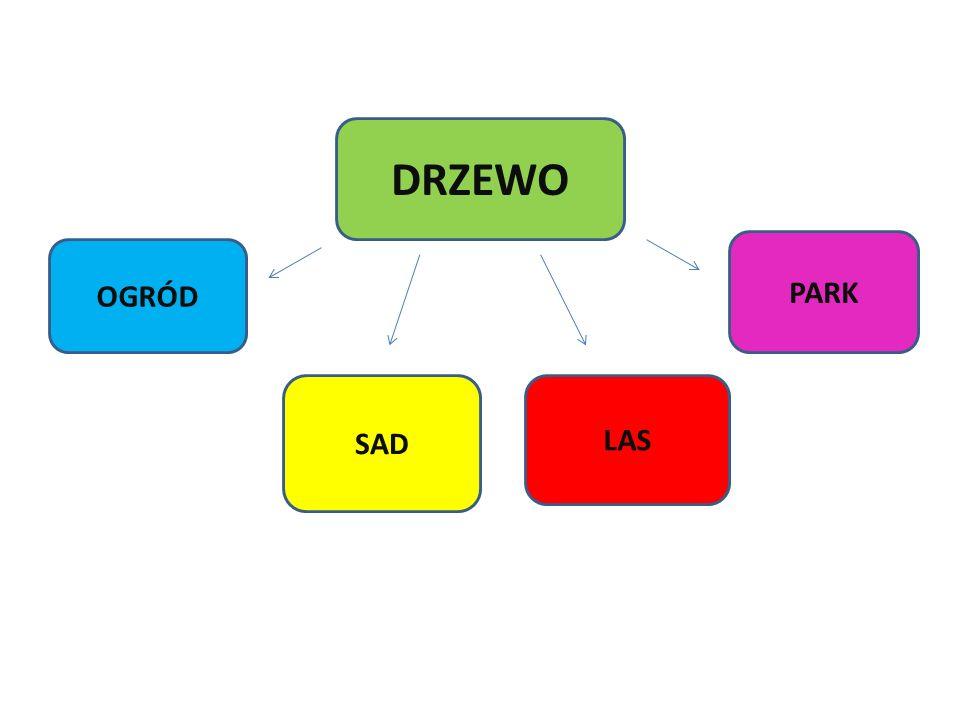 DRZEWO PARK OGRÓD SAD LAS
