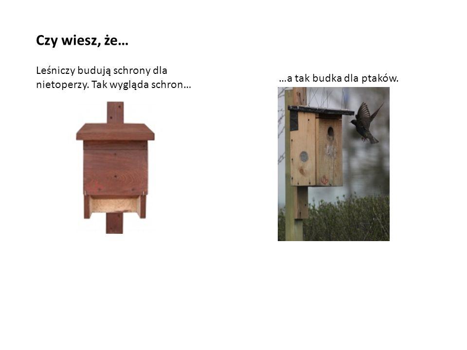 Czy wiesz, że… Leśniczy budują schrony dla nietoperzy. Tak wygląda schron… …a tak budka dla ptaków.