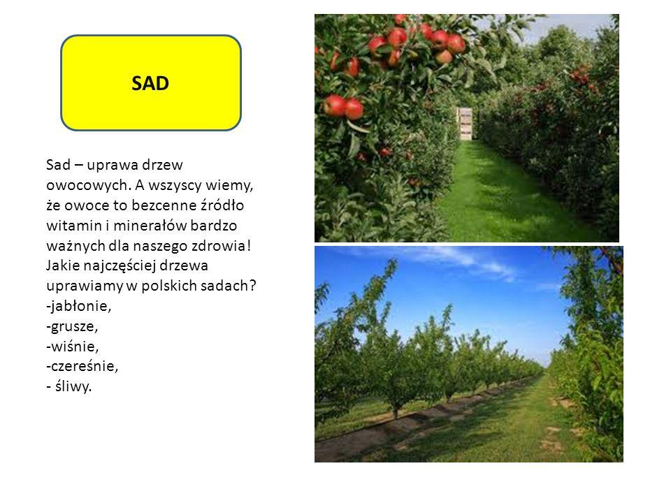 SAD Sad – uprawa drzew owocowych. A wszyscy wiemy, że owoce to bezcenne źródło witamin i minerałów bardzo ważnych dla naszego zdrowia!
