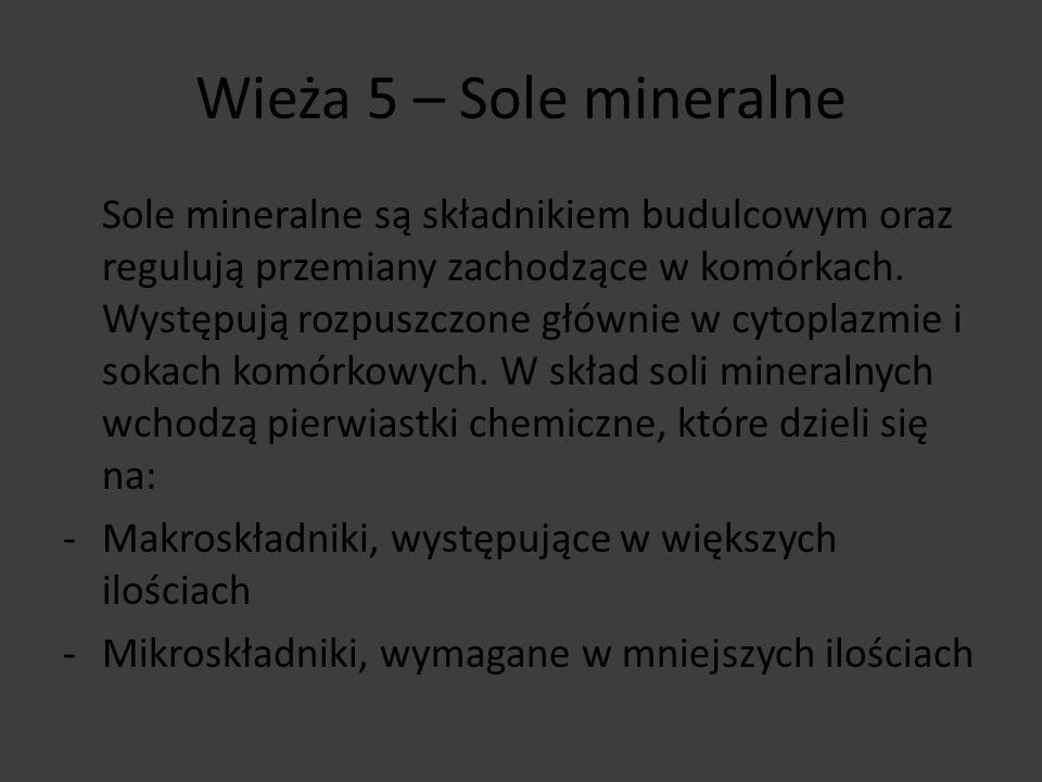 Wieża 5 – Sole mineralne