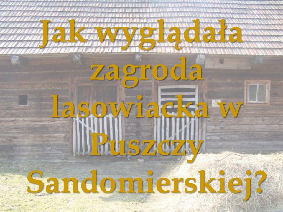 Jak wyglądała zagroda lasowiacka w Puszczy Sandomierskiej