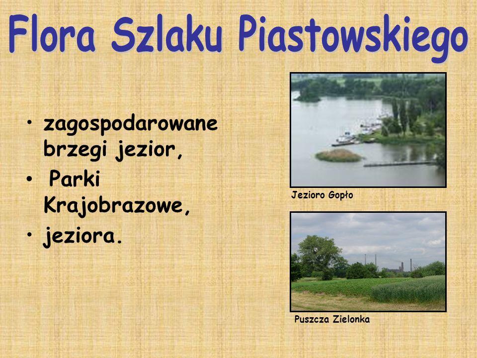 Flora Szlaku Piastowskiego