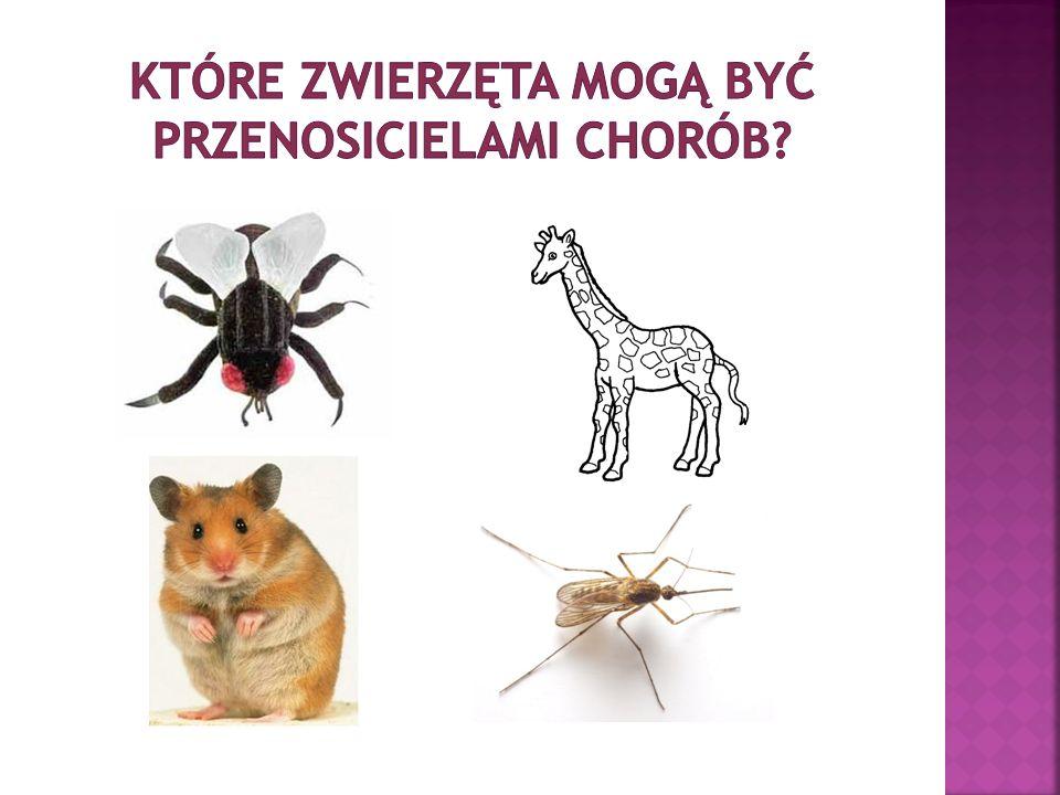 Które zwierzęta mogą być przenosicielami chorób