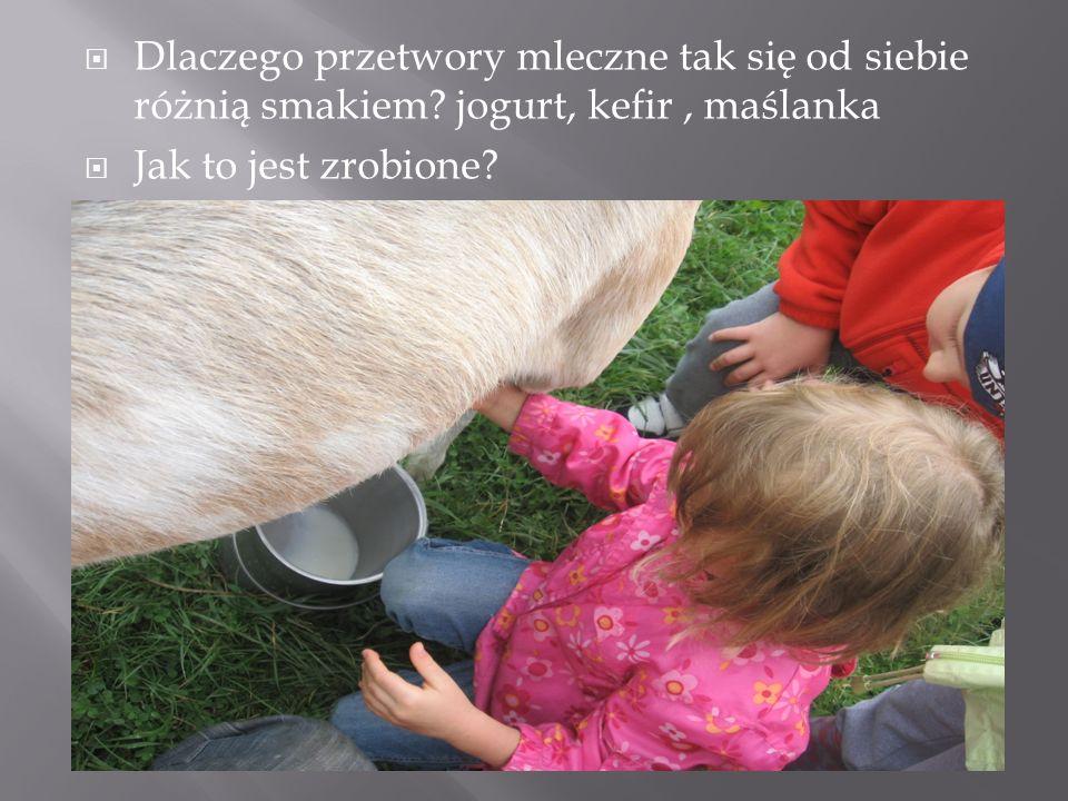 Dlaczego przetwory mleczne tak się od siebie różnią smakiem