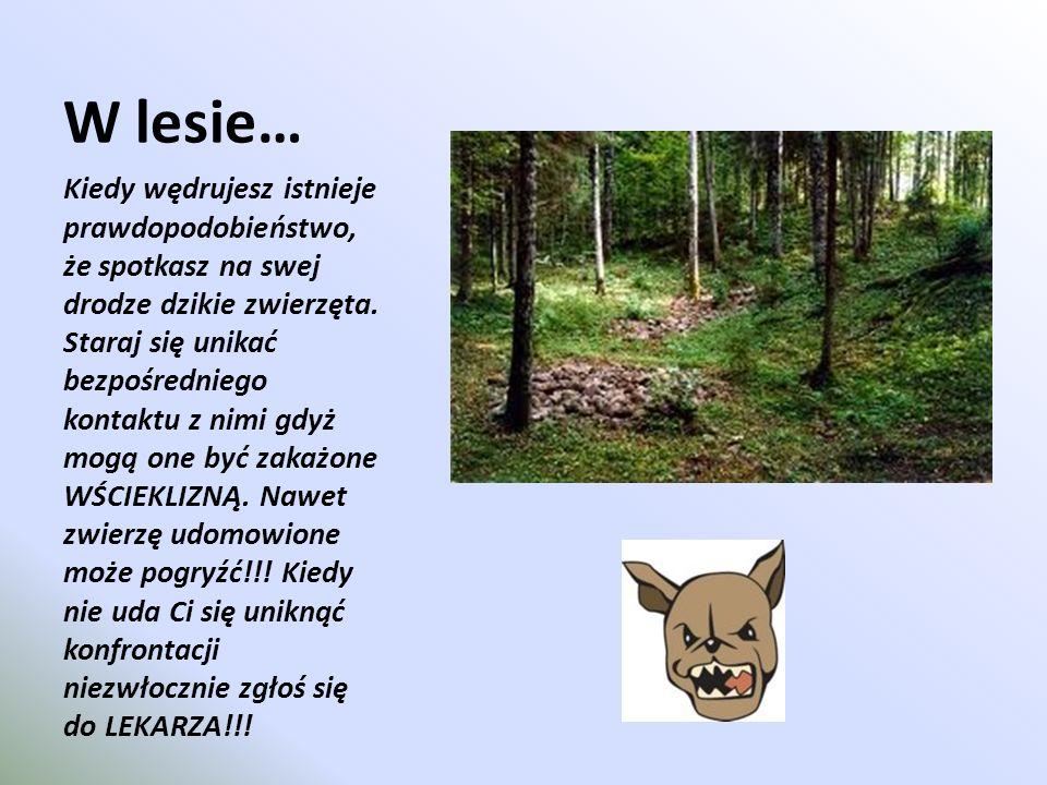 W lesie…