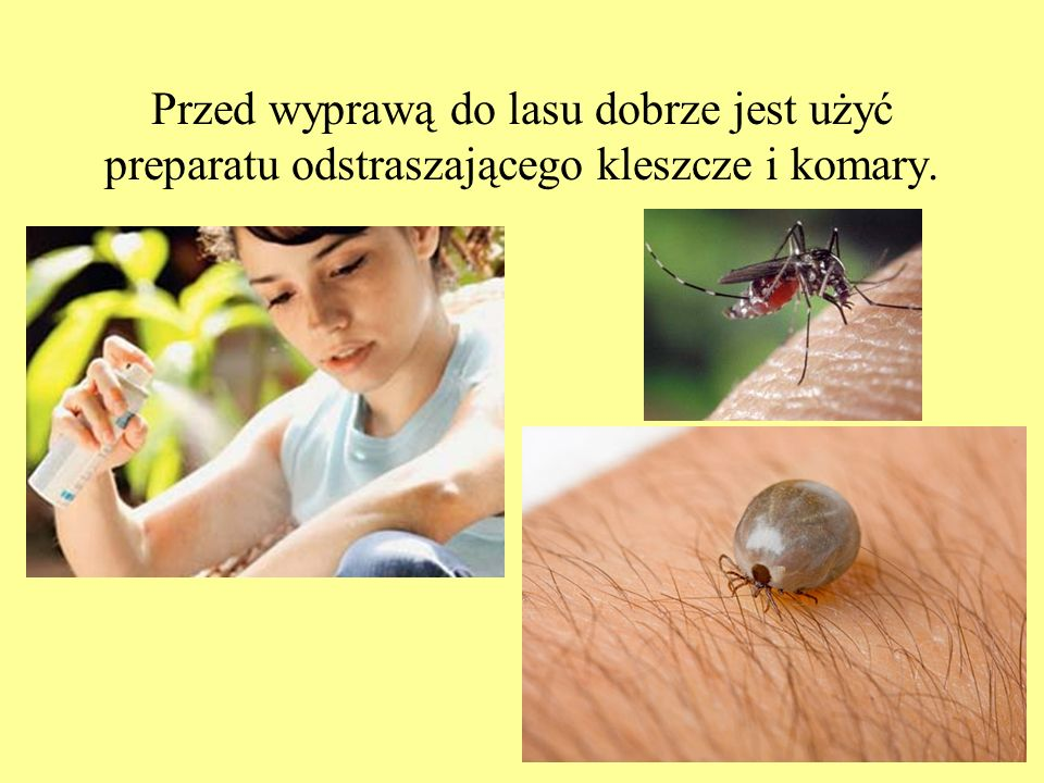 Przed wyprawą do lasu dobrze jest użyć preparatu odstraszającego kleszcze i komary.