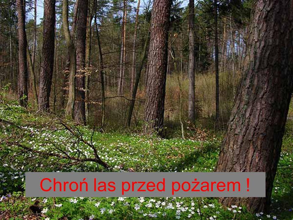 Chroń las przed pożarem !