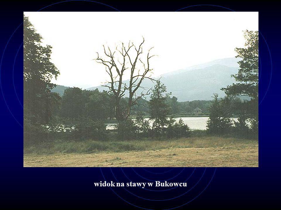 widok na stawy w Bukowcu