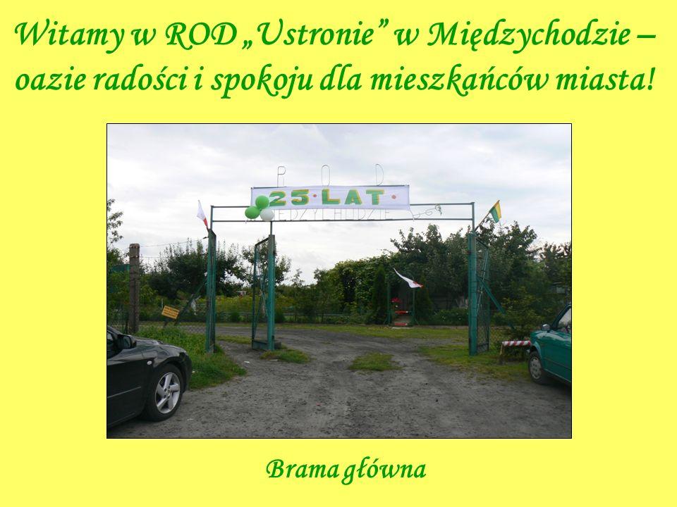 """Witamy w ROD """"Ustronie w Międzychodzie – oazie radości i spokoju dla mieszkańców miasta!"""