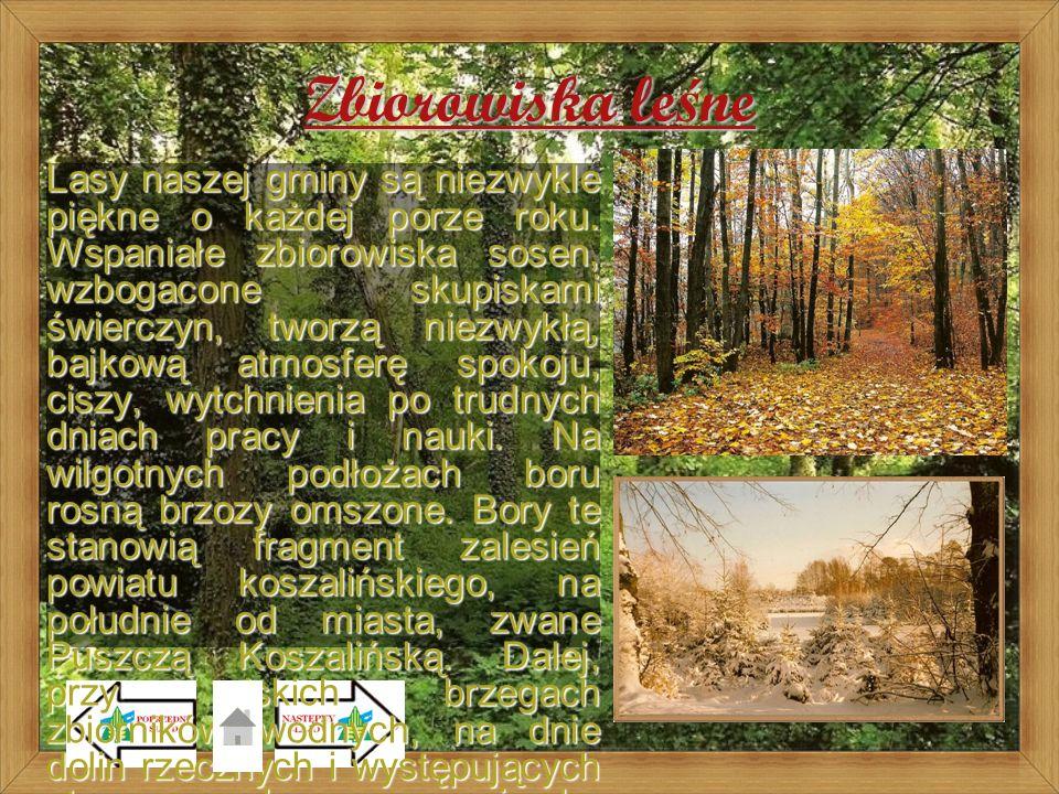 Zbiorowiska leśne